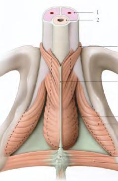 Comprendre les troubles de l'érection après la chirurgie de la prostate